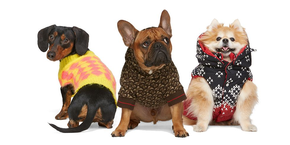 SSENSE Is Selling Designer Items For Dogs Now