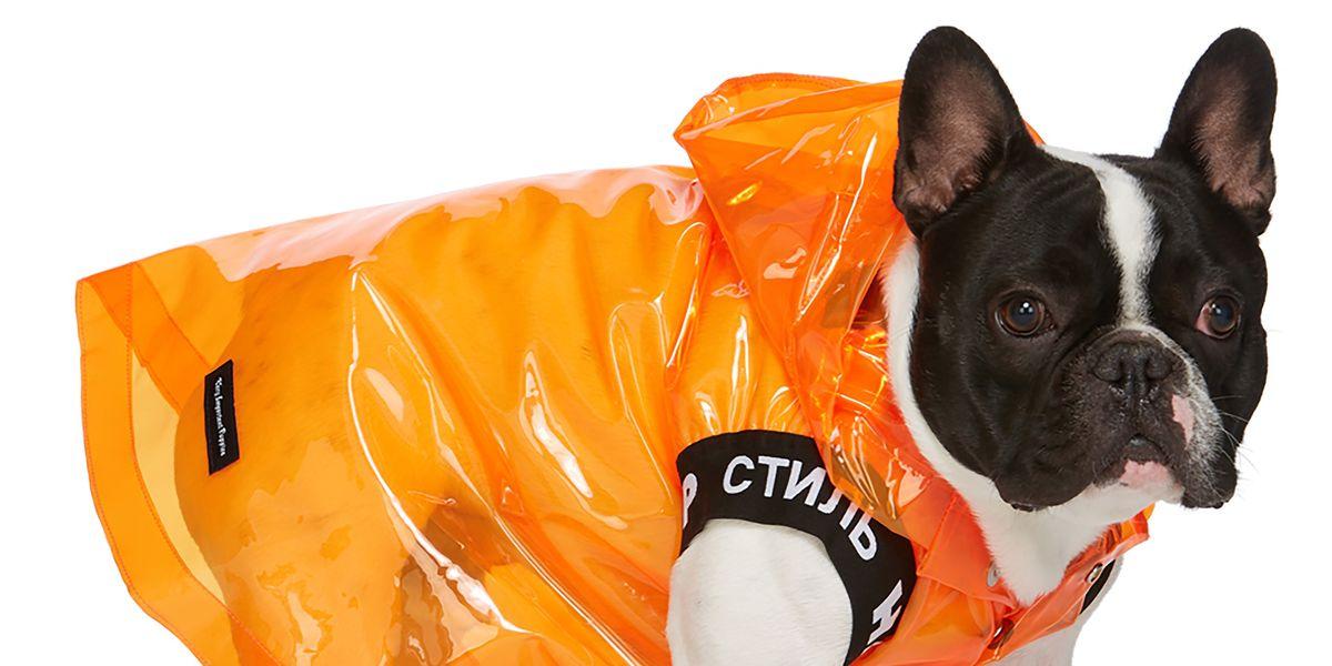 Imagine Dressing Your French Bulldog in Heron Preston