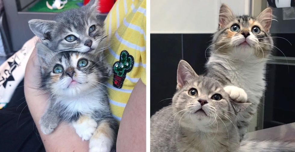 Kittens Rescued from the Street Have Their Dream Come True Right Before the New Year