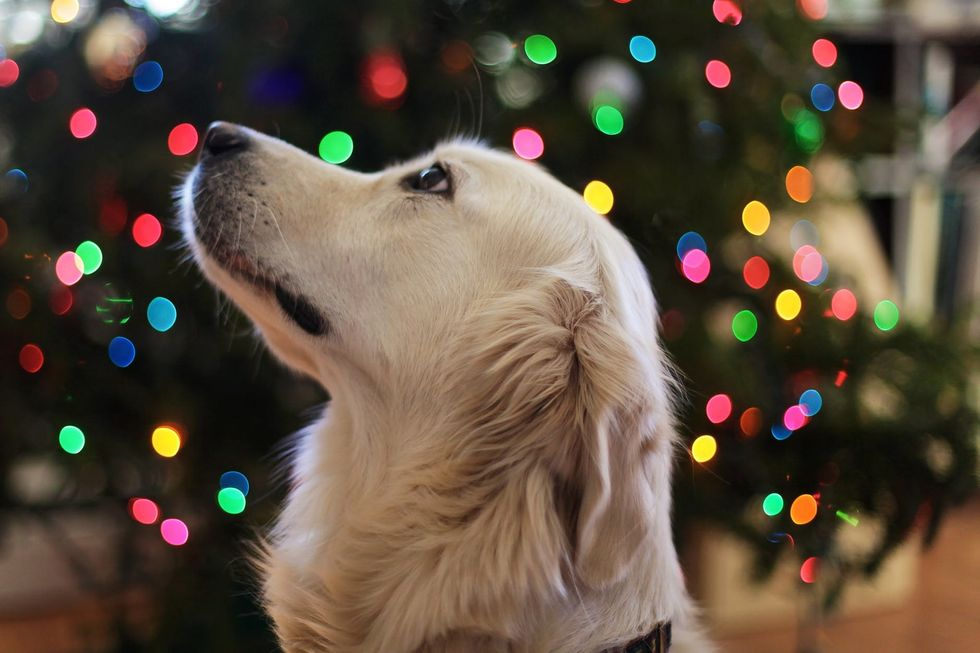 If You Got A Pet For Christmas, Remember They're A LIFELONG Responsibility, Not Just A Gift