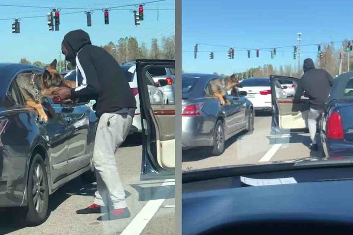 Man jumps out of his car with a puppy in the most adorable red-light moment ever recorded