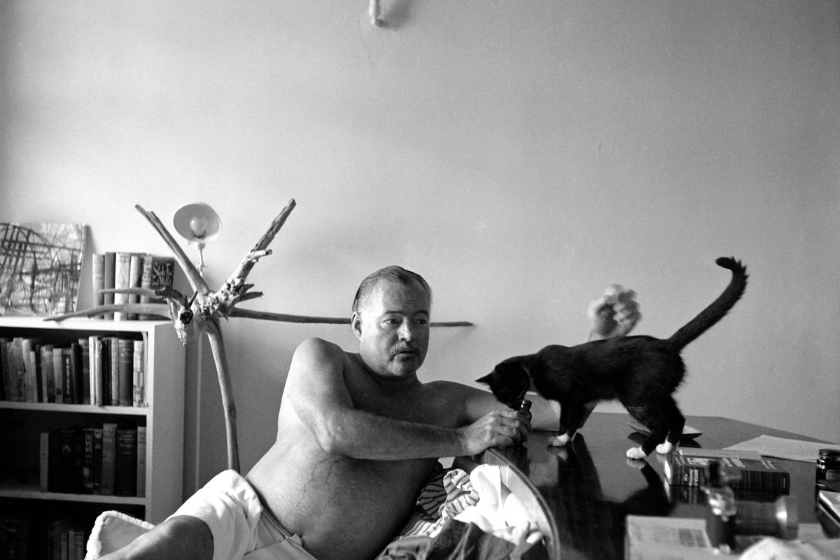 L'ultimo capolavoro di Hemingway è l'esercito di gatti che abita casa sua