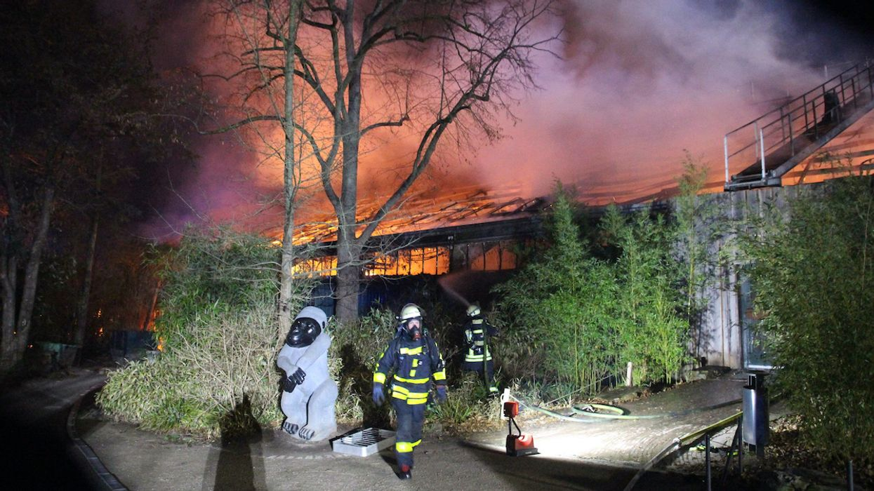 Fire Kills at Least 30 Animals at German Monkey House