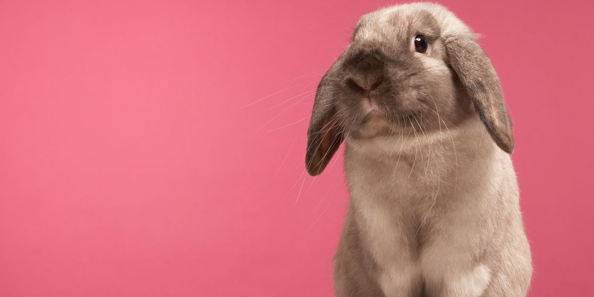 These Three Major States Just Banned Animal Testing in Cosmetics