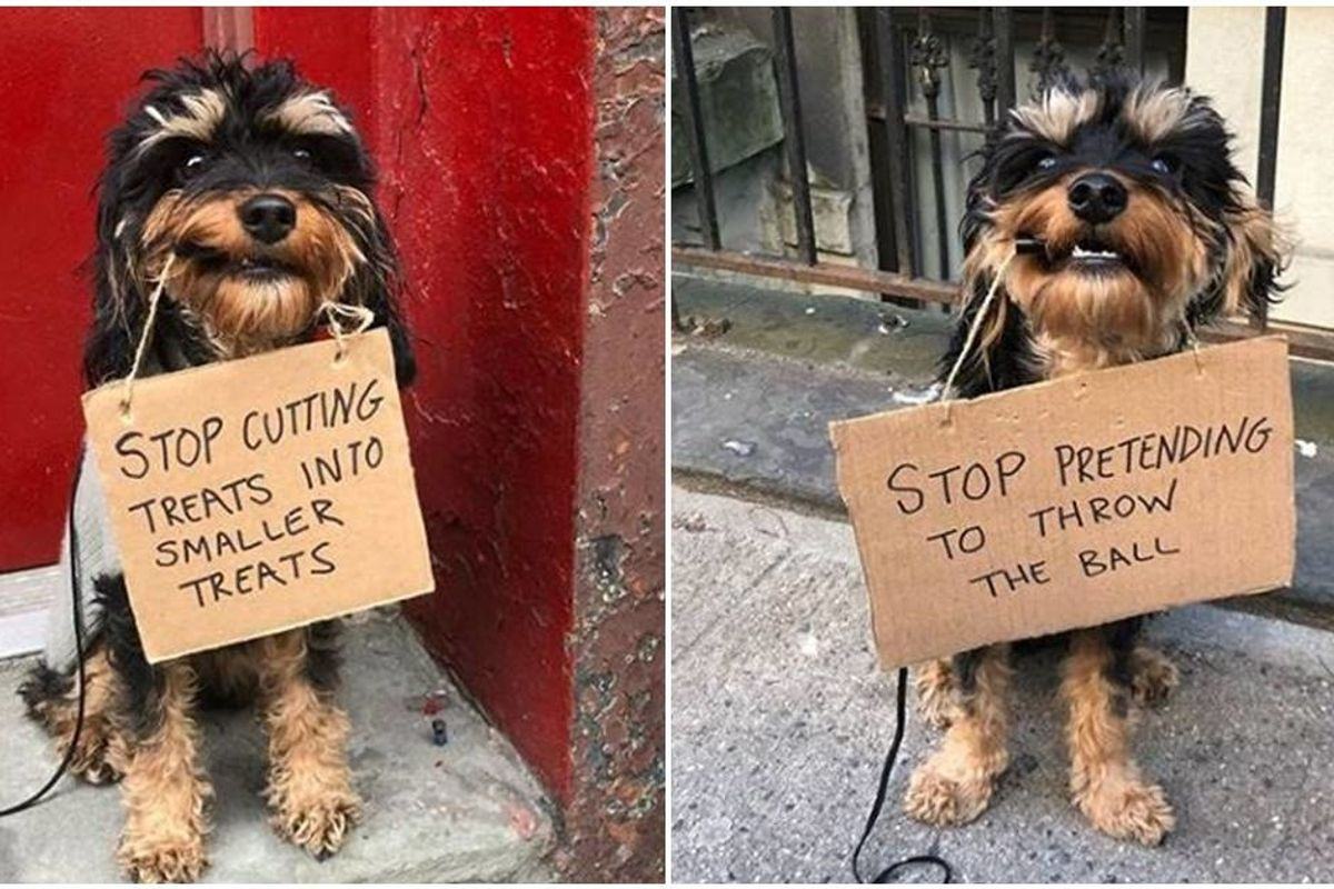 An adorable dog is turning the tables on his owner by holding signs that shame humans