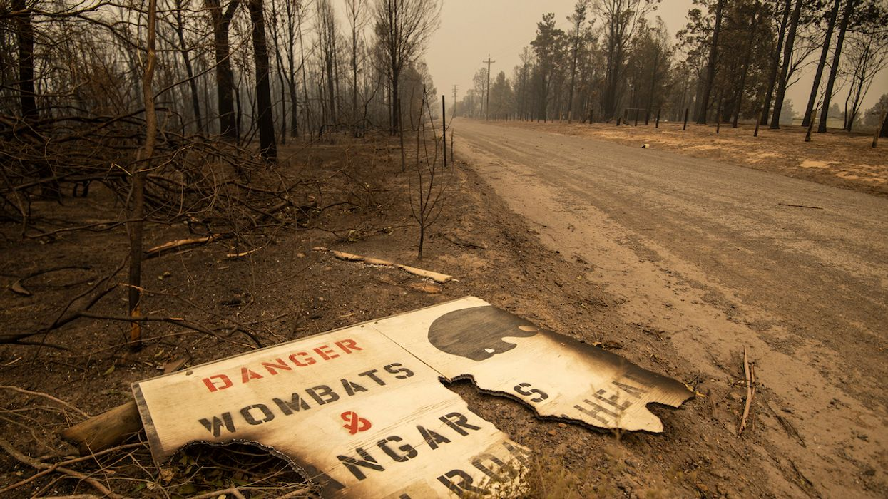 25 Humans, More Than One Billion Animals  Dead in Australia Wildfires