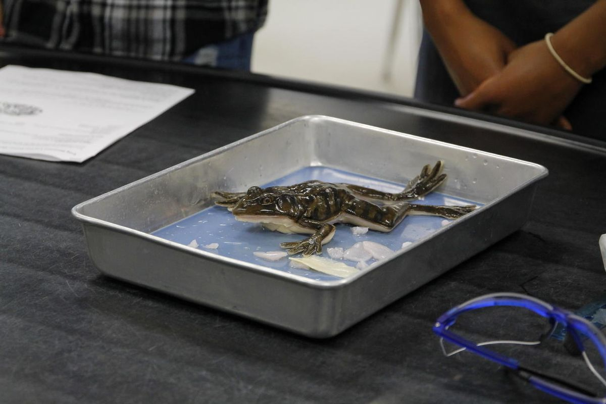 A Florida high school just became the first classroom to dissect synthetic frogs