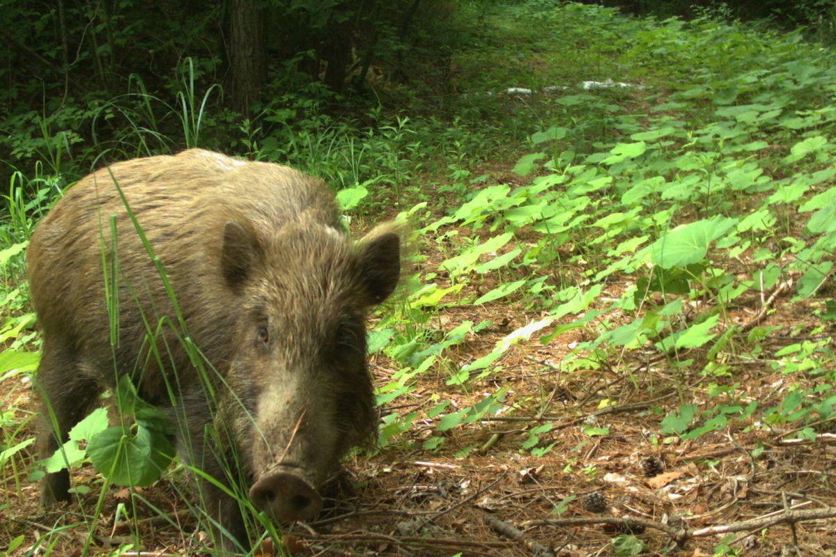 The areas around Fukushima are  still contaminated, but wildlife is somehow thriving