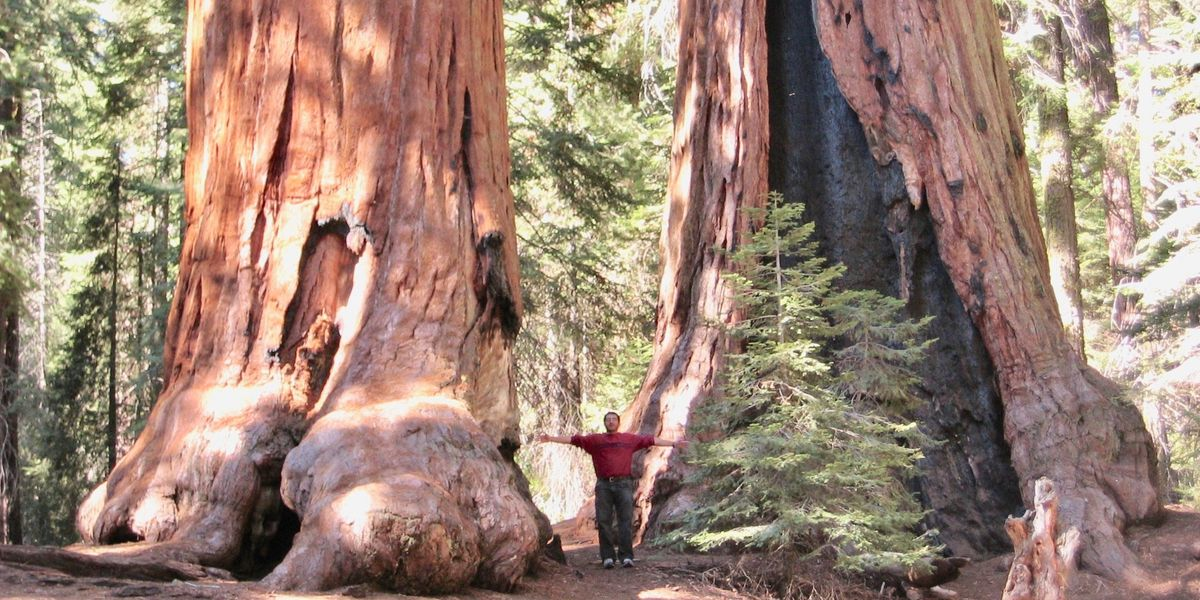 World's Fifth-Largest Tree Now Safe From Loggers in an 'Inspiring Outpouring of Generosity'