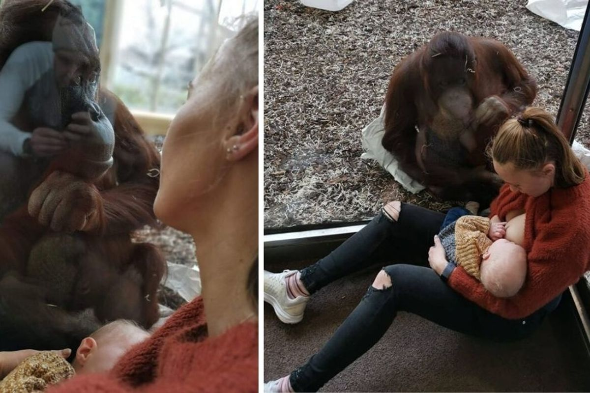 Breastfeeding mom's touching encounter with an orangutan has people swooning—and debating