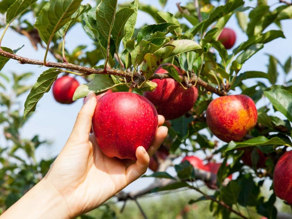 To The Single Girl Still Waiting For Her Man - We Are All Apples Waiting To Be Picked