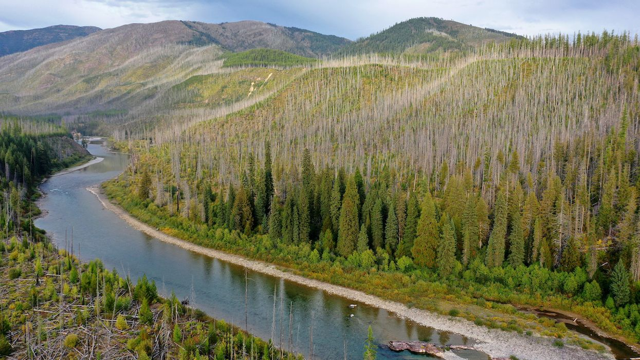 New Forests Planted Near Rivers Could Use up All the Water, Study Finds