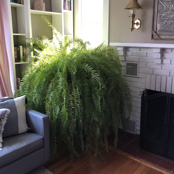This Fern Is More Famous Than You'll Ever Be