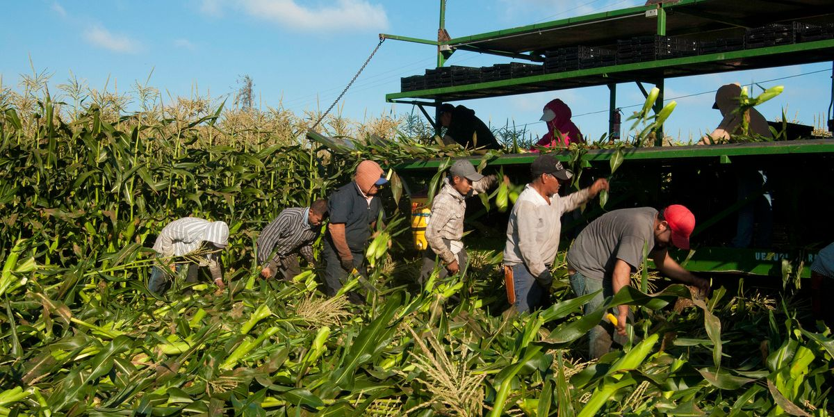 New country, same oppression: It's time to bolster farmworkers' rights