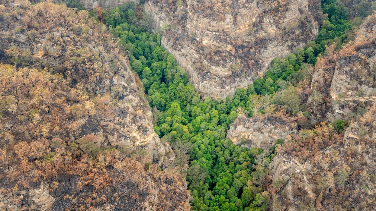 Australia Firefighters Save the Only Wild Prehistoric Wollemi Pines on Earth