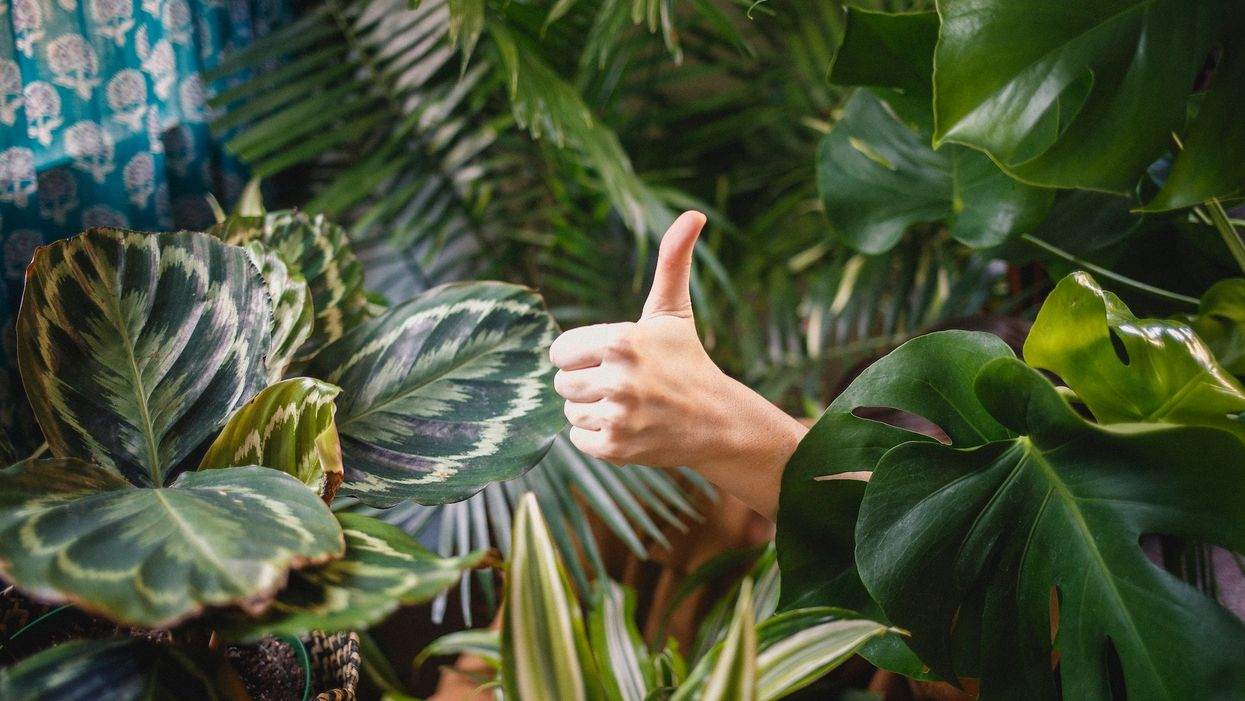 hand giving thumbs up in a room full of plants