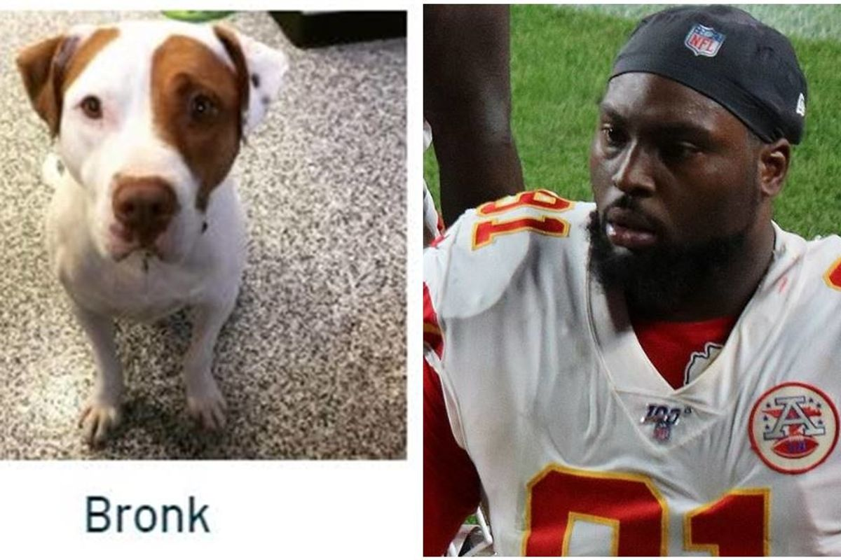 Chiefs player celebrates Super Bowl victory by paying adoption fees for over 100 shelter dogs
