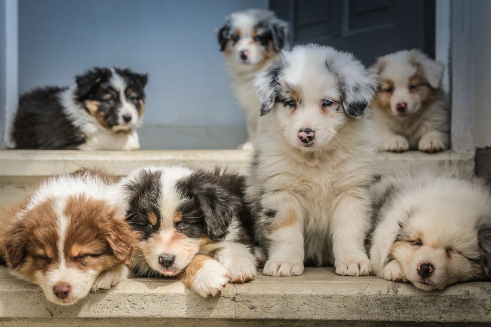 group of cute puppies