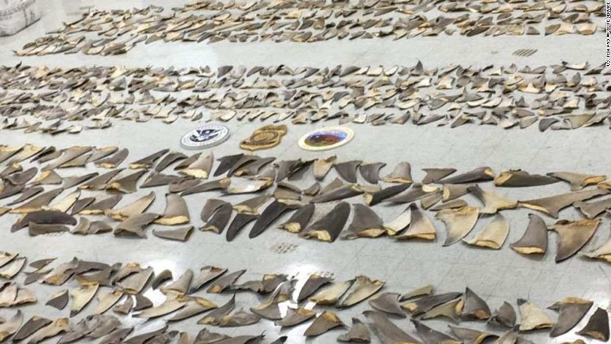 $1 Million Worth of Shark Fins Seized at Miami Port