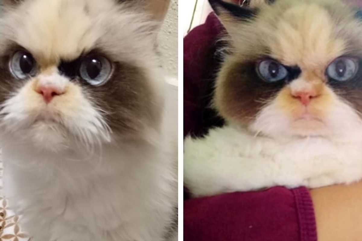 Woman Gave Kitten with Grumpy Face a Home, the Kitty Changed Her Life Forever