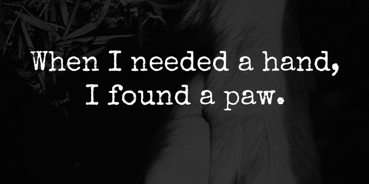 When I Needed A Hand, I Found A Paw