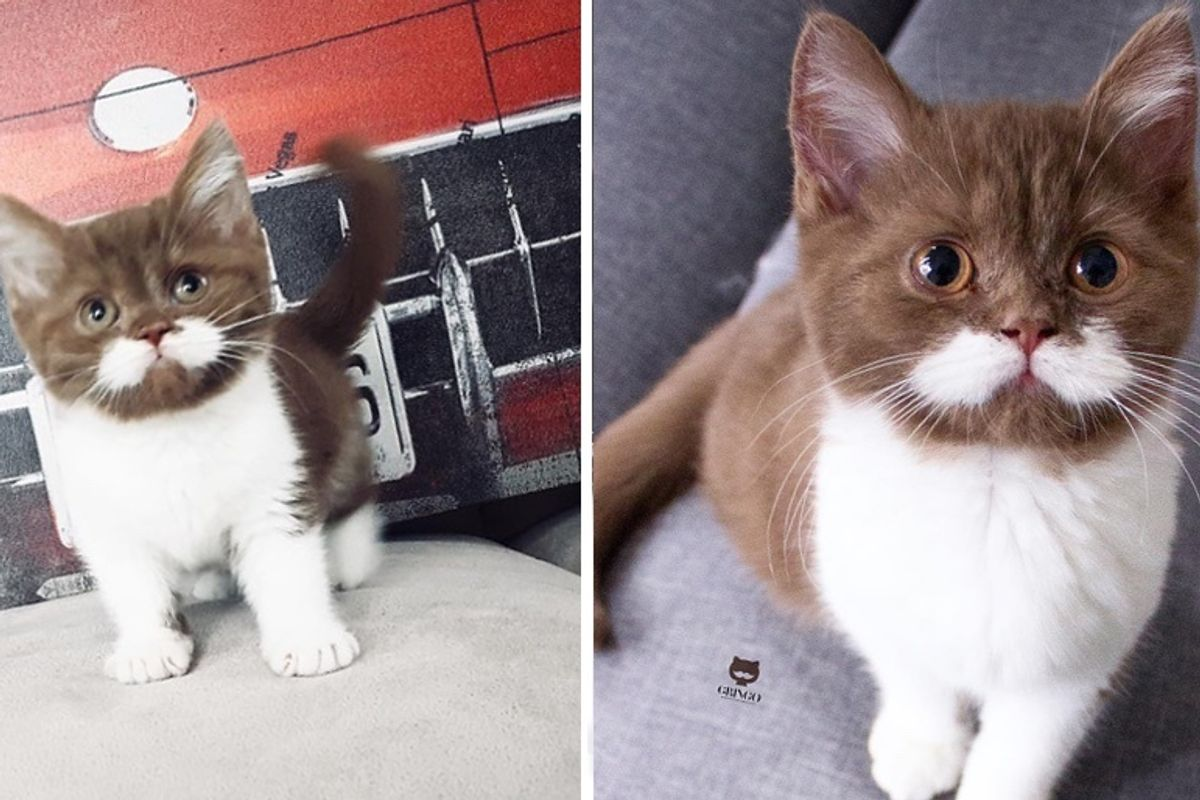 Kitten With Perfect Mustache Hopped into Heart of Family