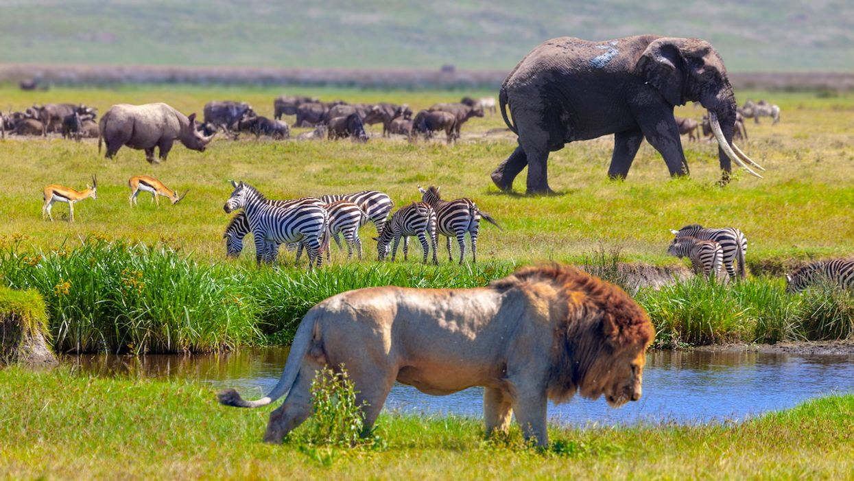 Trump's Trophy Hunting Council Disbanded After Legal Defeat