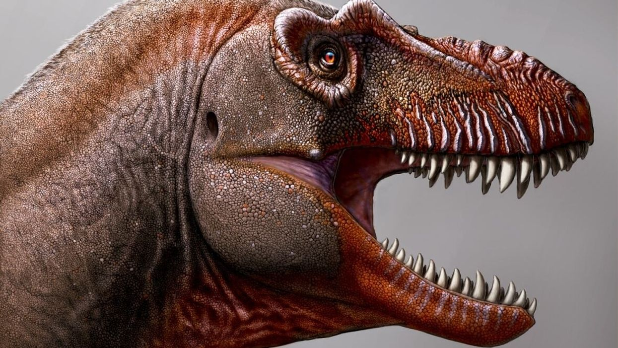 'Reaper of death' who fed on other dinosaurs discovered