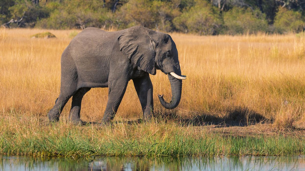 Botswana Auctions Off First Licenses to Kill Elephants Since Ending Five-Year Ban