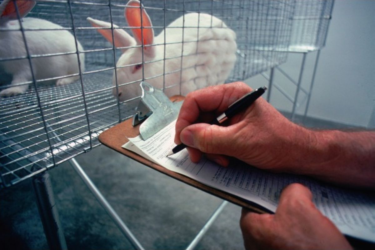 You can now adopt former FDA lab animals. And they make great pets, too.