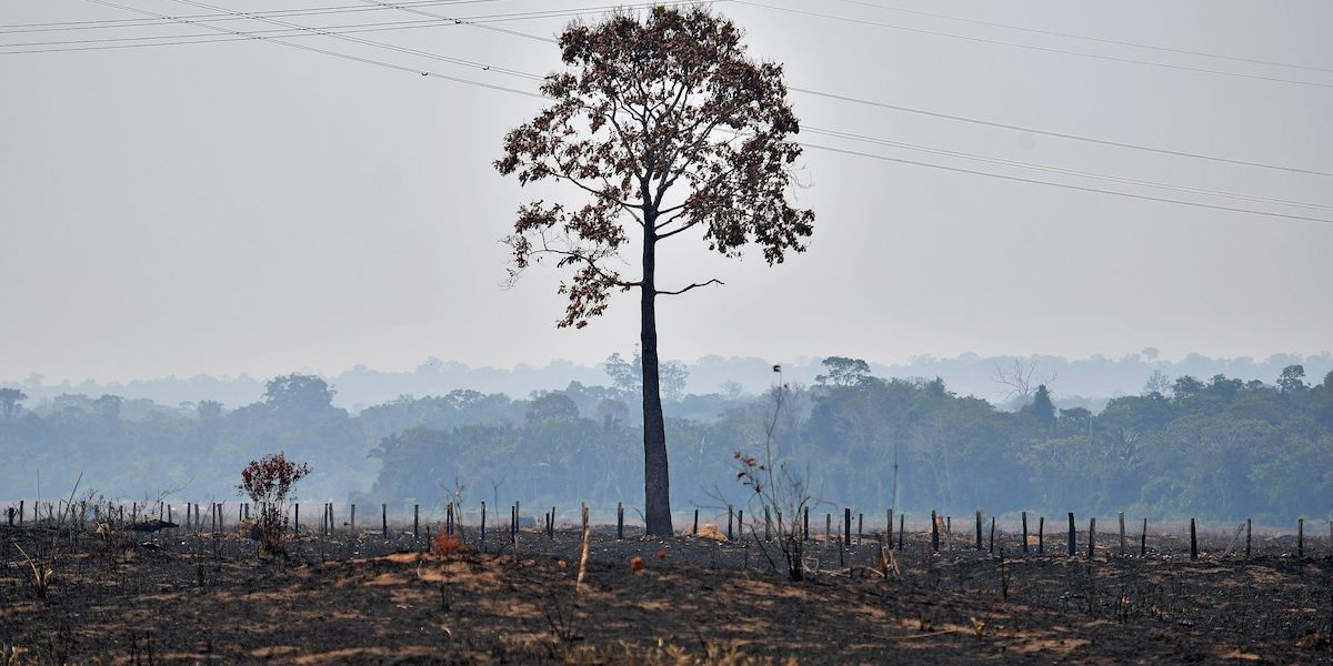 Amazon Deforestation Is Causing 20% of Forests to Release More Carbon Than They Absorb