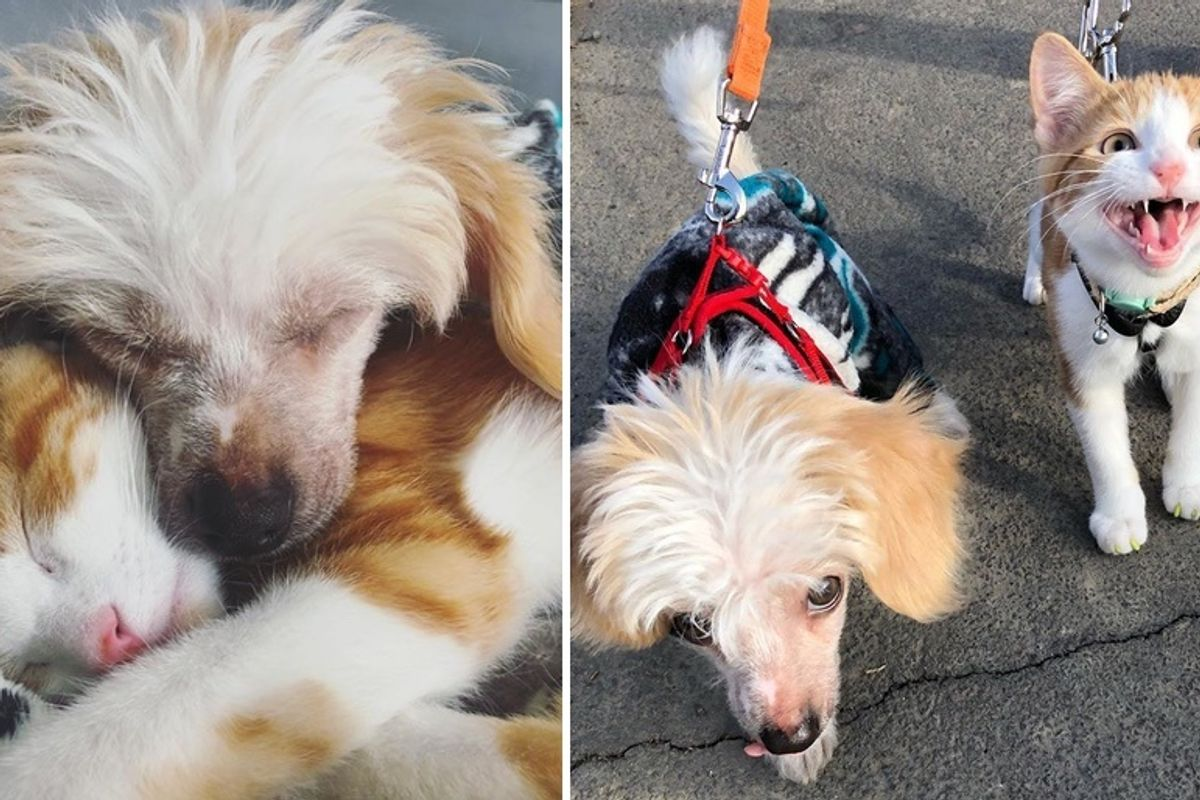 Stray Kitten Cuddles Family Dog and Insists on Being His Friend