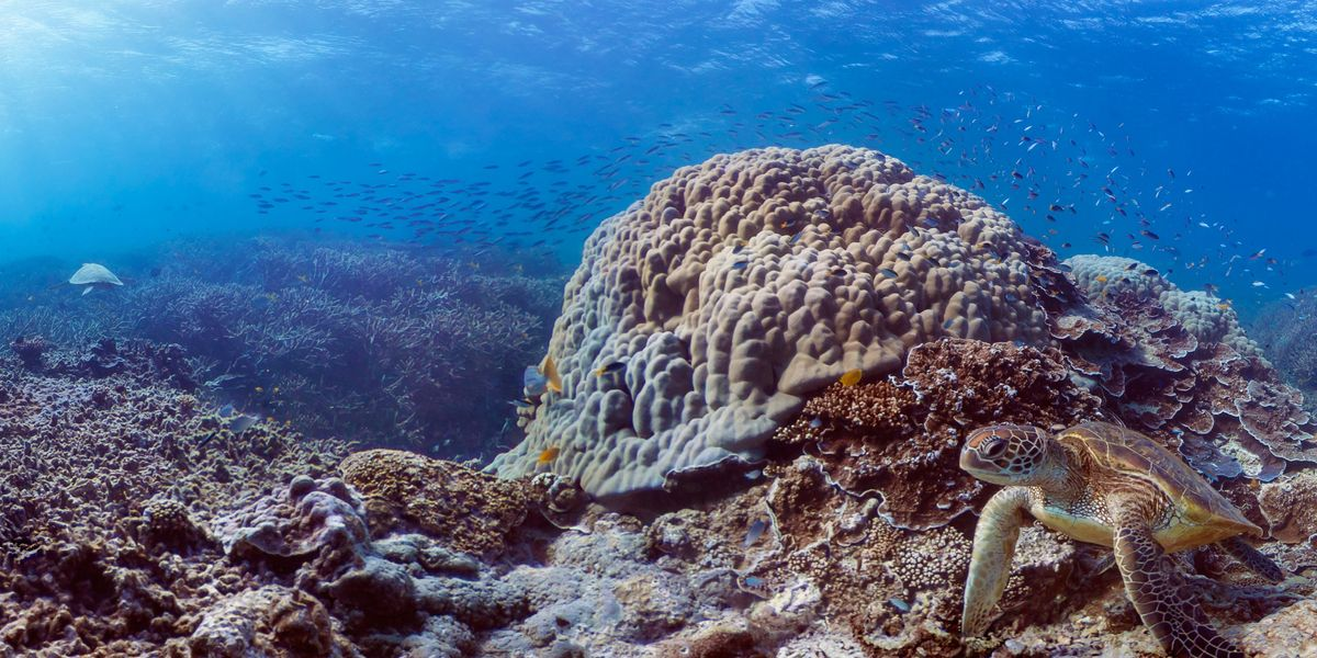 Report Details Climate Crisis Impacts on Coral Reefs, Warns of 'Human Tragedy'