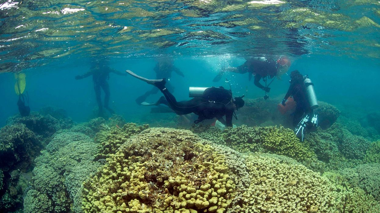 Coral in Crisis: Can Replanting Efforts Halt Reefs' Death Spiral?