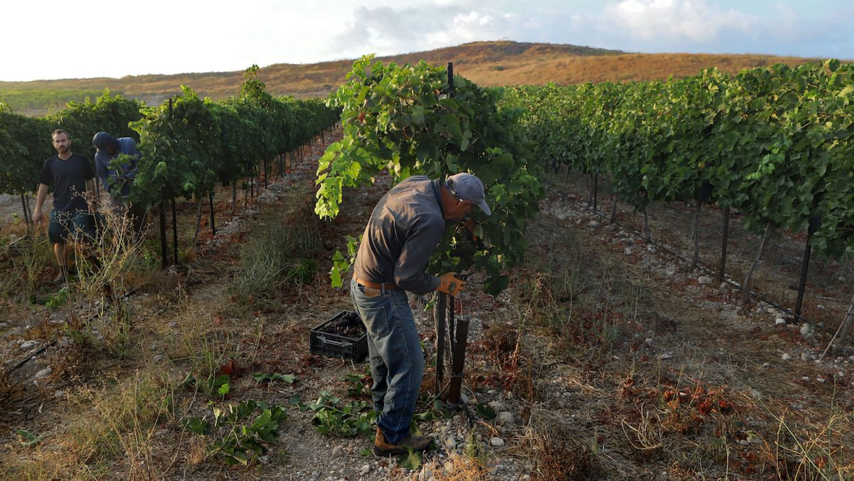 Climate Crisis Could Destroy Most Vineyards