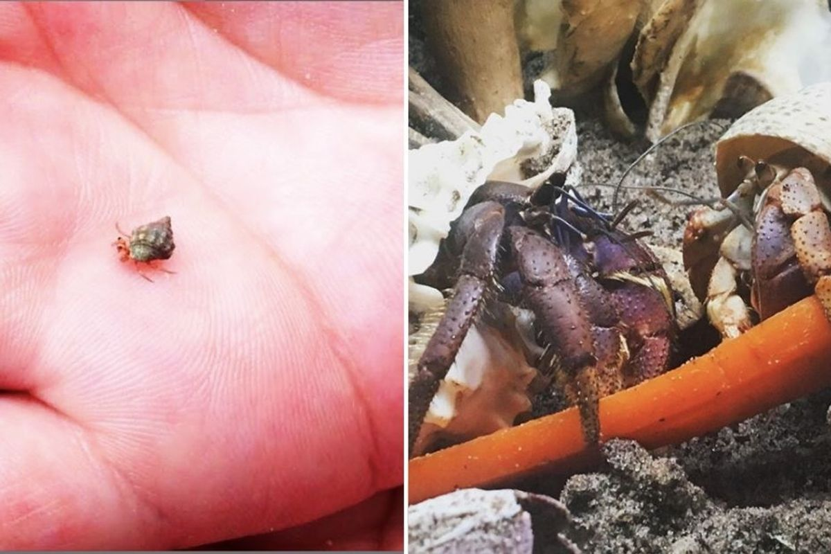 I never imagined becoming a 'hermit crab rescuer,' but every animal deserves good care