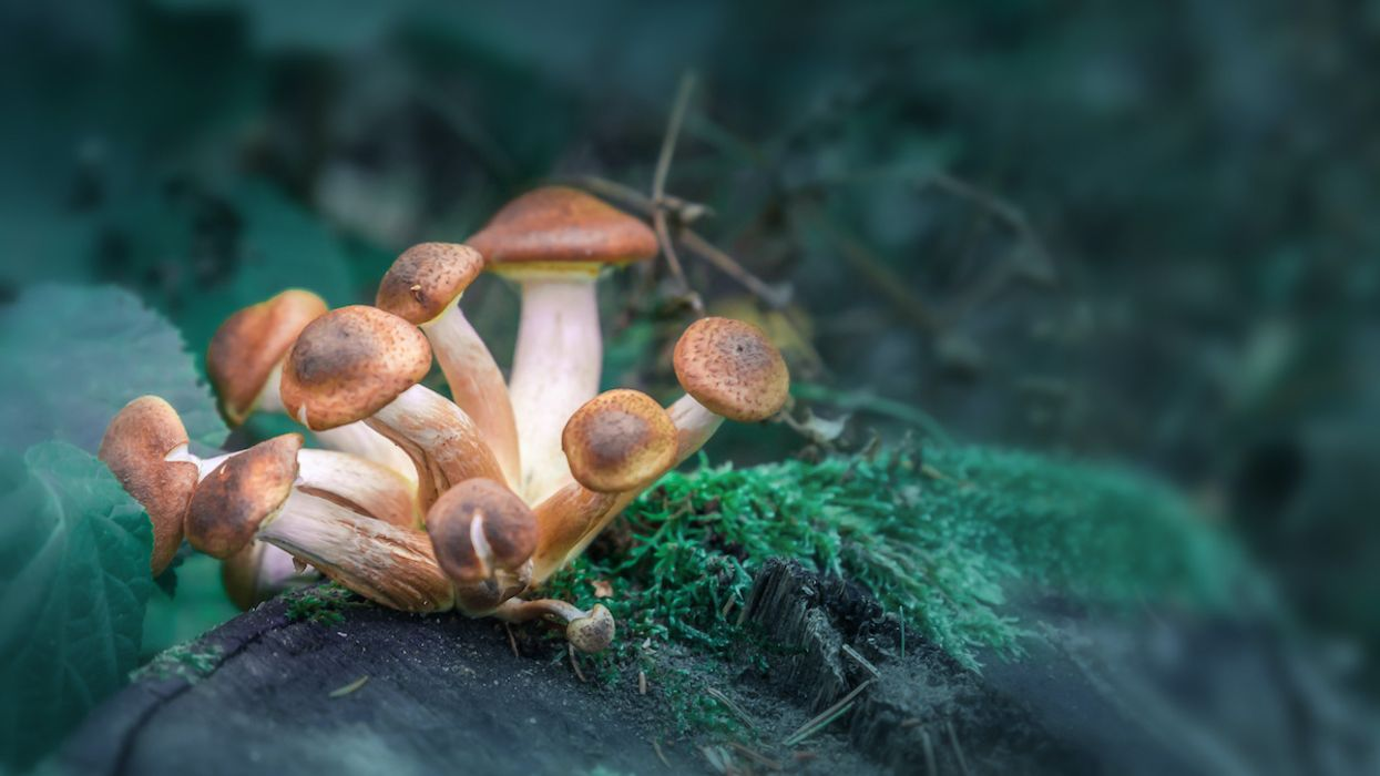 Single Dose of 'Magic Mushrooms' Provides Long-Term Anxiety Relief for Cancer Patients, Study Suggests