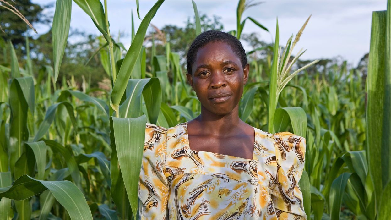 Africa's Organic Farmers Struggle to Get Certified
