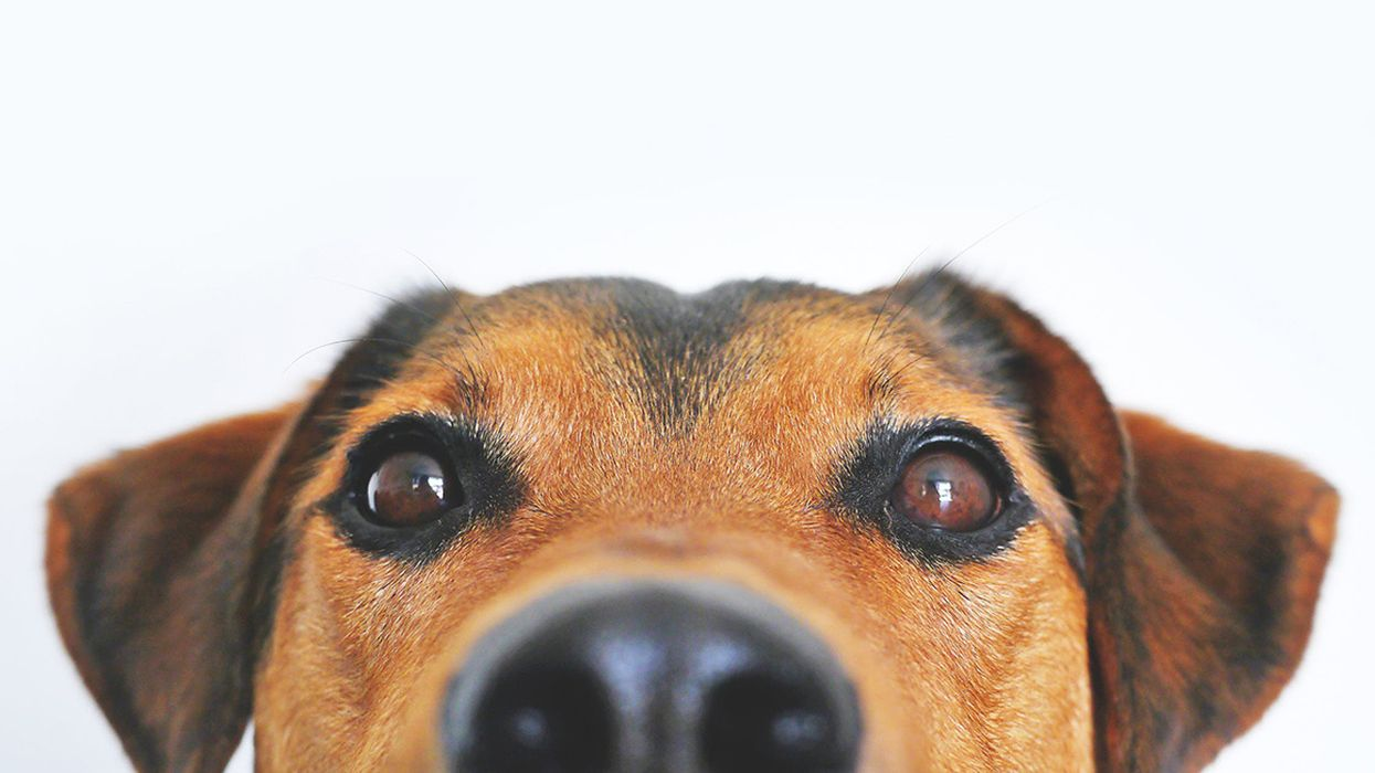 Is Coconut Oil Good or Bad for Dogs? The Surprising Truth
