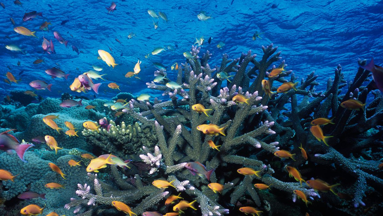 Coral Reefs Could Be Completely Lost to the Climate Crisis by 2100, New Study Finds