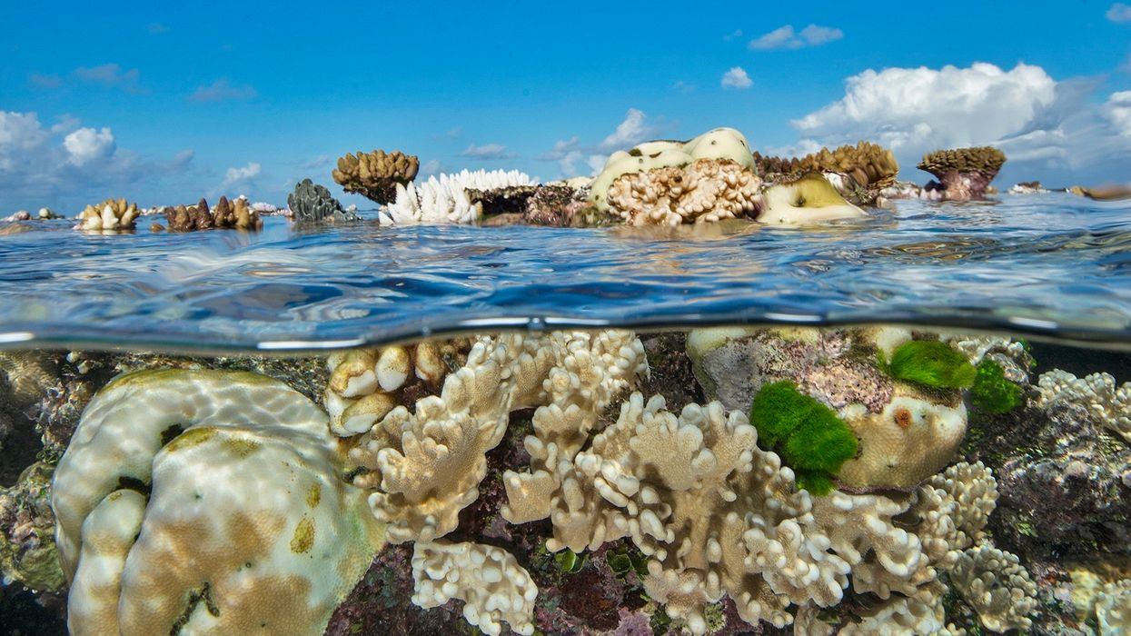 'The Great Barrier Reef is on a Knife Edge': Reef Faces Third Major Bleaching Event in Five Years