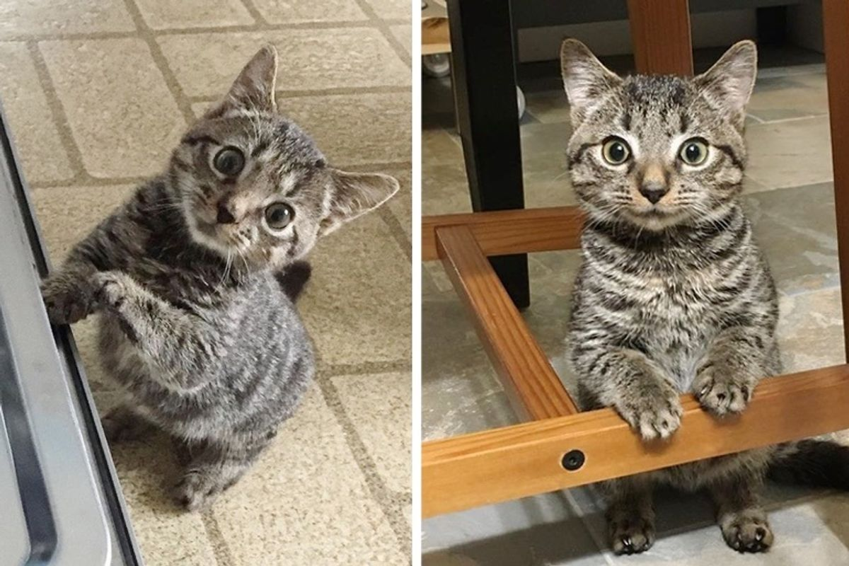 Kitten Half the Size for His Age is So Happy to Be Rescued
