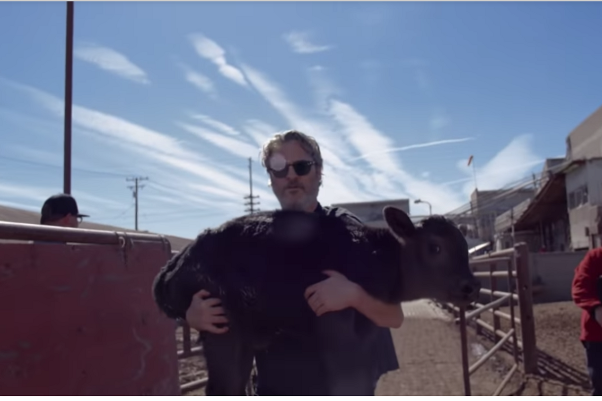 Joaquin Phoenix rescues cow and her calf after 'compassionate talk' with slaughterhouse owner