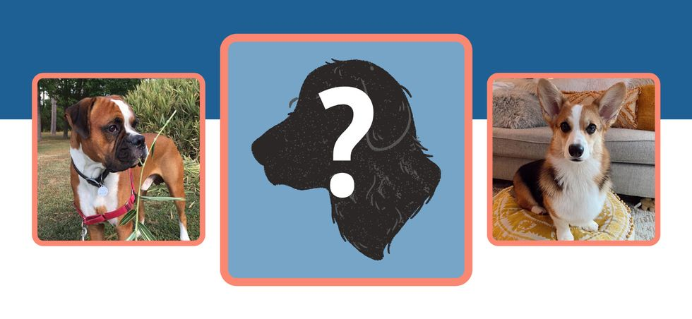 Odyssey Template: Create A Pet Profile To Help Introduce The World To Your Favorite Animal