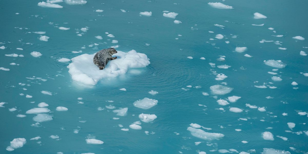 Alaska's Marine Ecosystem Is Changing 'Decades Too Early' Due to Climate Crisis