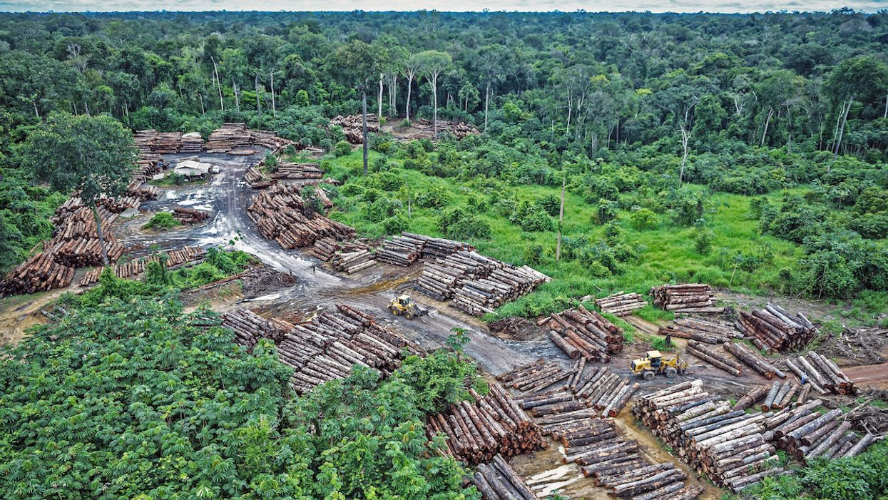 UK Government Plans to Lead Global Coalition Against Illegal Logging and Deforestation