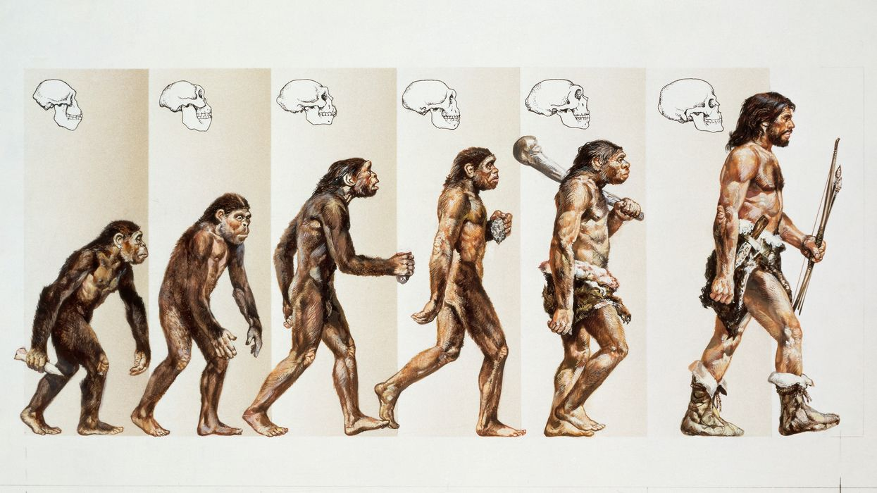 Evolution picture of march of progress is wrong