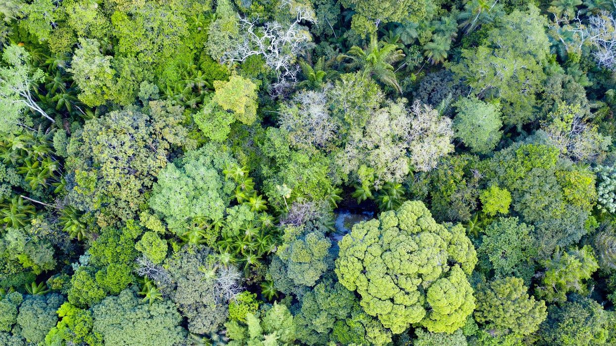 Tropical Forests Are Losing Their Ability to Absorb Carbon, Study Finds