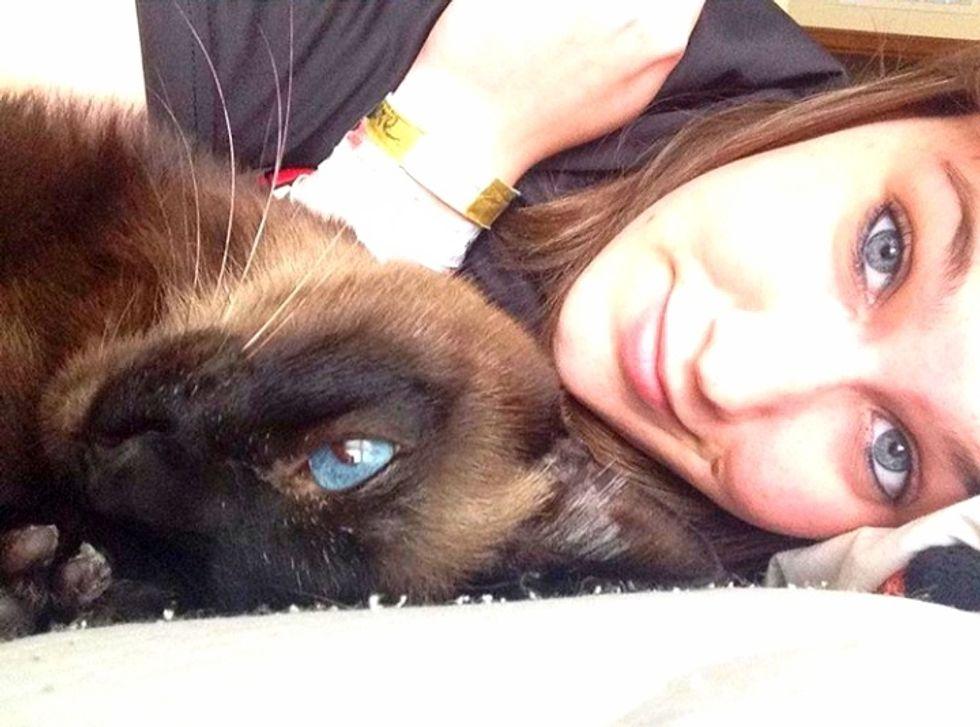 Meet My Cat: Sam, A Siamese Who Lives In Oklahoma City