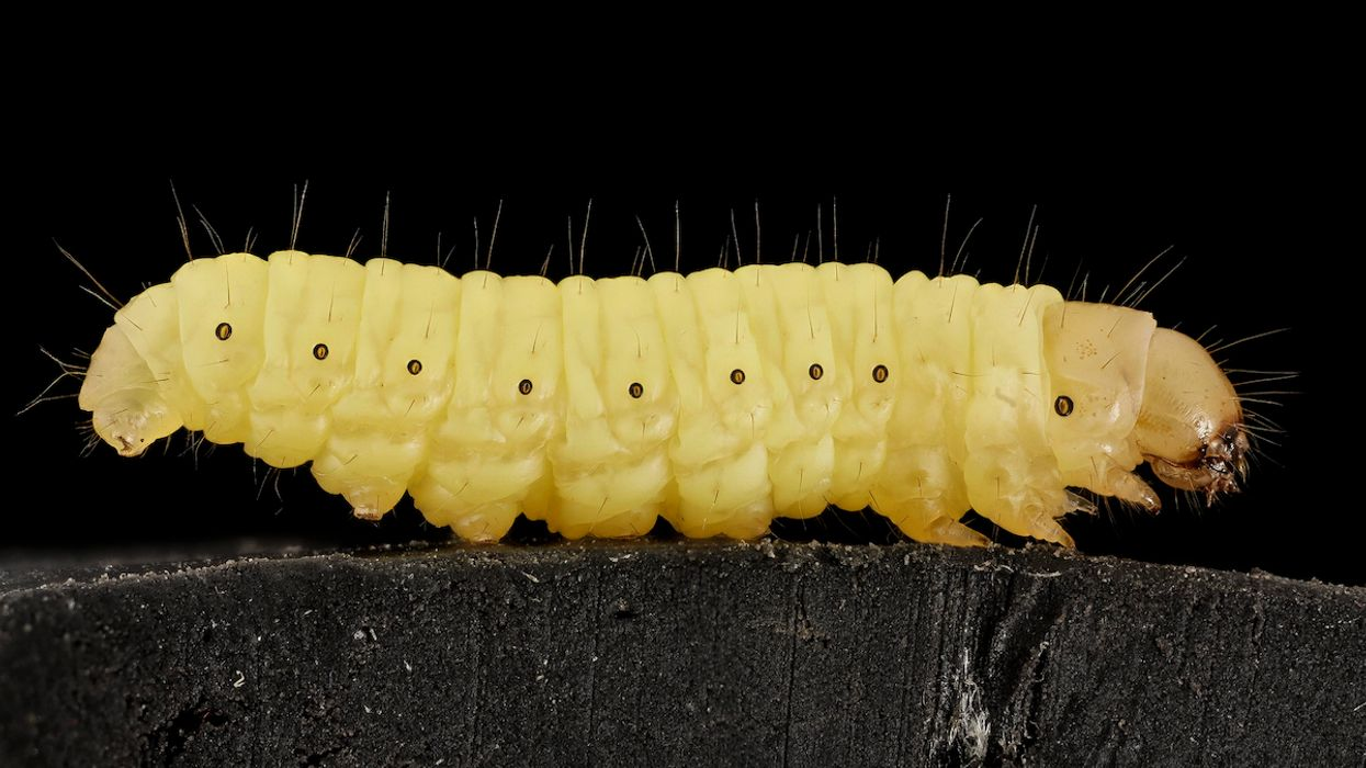 How a Plastic-Eating Caterpillar Could Help Solve the World's Waste Crisis